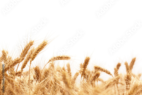 canvas print picture Wheat