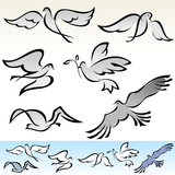 AMAZING   FLYING  BIRDS VECTOR