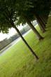 Jardin, parc, Versailles, nature, vert, arbres, pelouse, allée