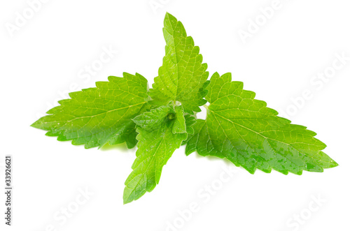 Green fresh mint