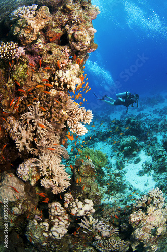 Papiers peints Plongée Scuba divers swim underwater in clear blue water