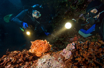 Two diwers and scorpionfish