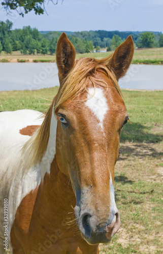 Fototapeta Portrait of a red with a white horse with colored eyes