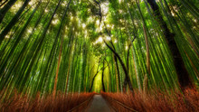 Le Bamboo Forest