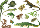 set of reptiles and amphibians isolated on white poster