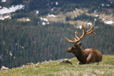 The Bull Elk's Bugle