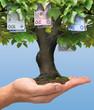 Money tree - polish money