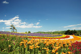 Fototapety 花畑