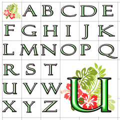 ABC Alphabet background hibiscus felix green design