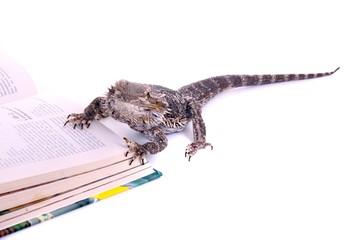 Reptilie Bartagame blättert im Buch