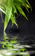 Wet bamboo on black with reflection in water.