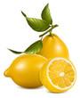 Vector. Fresh lemons with leaves.