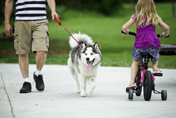 Walking a Husky Dog