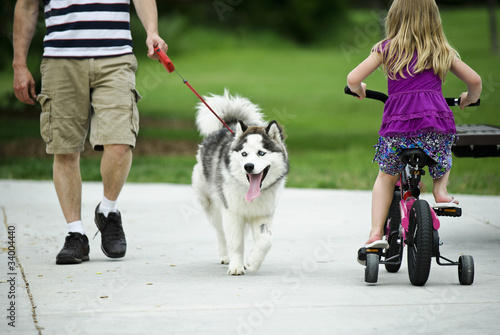Walking a Husky Dog
