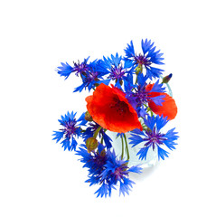 poppey and blue cornflowers  isolated on white background