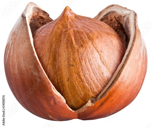 Open filbert nut isolated on a white background.