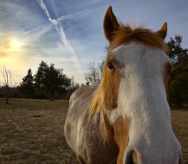Horse sunset