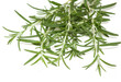 twigs of rosemary