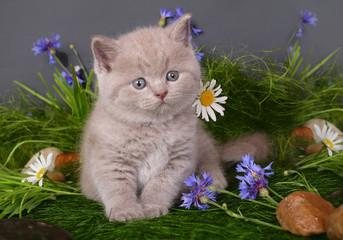 Kitten in flowers on a black background