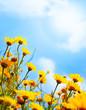 Flowers border over sky