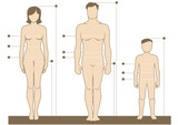 Human body measurements and proportions