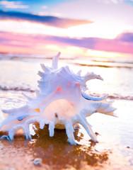 Shell Beauty Landscape