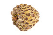 Anon or custard apple on white background
