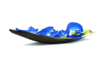 Blue Flower Boat
