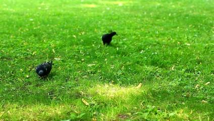 Голуби кормятся в парке