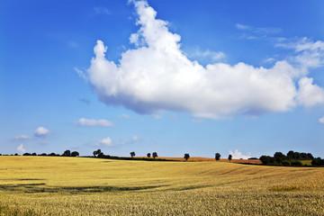 Weizenfelder bei Malente