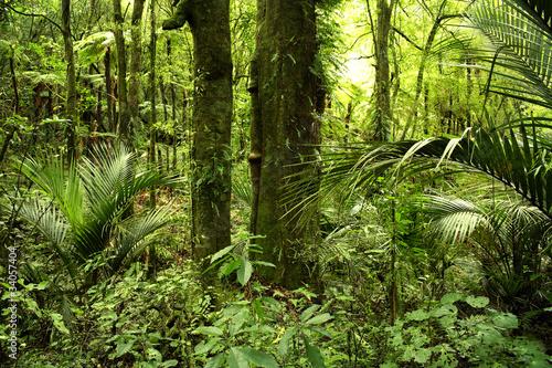 Fototapete urwald  Fototapete Urwald - Bewuchs - Wald - Pixteria