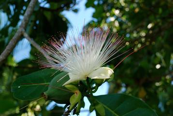 Flora (Seychellen)