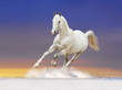 white horse with sun rising background behind