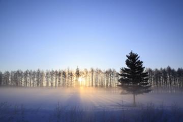 厳冬のカラマツ防風林の日の出