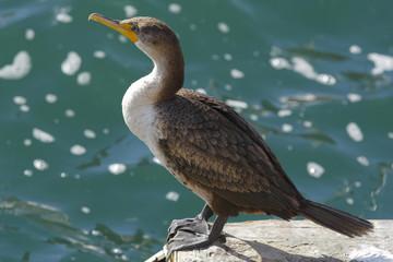 マリナデルレイの鳥