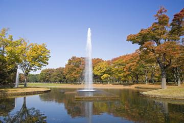 代々木公園の秋