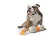 bulldog assis devant ses jouets préférés