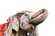 hand painted elephant profile, Jaipur, Rajasthan,India