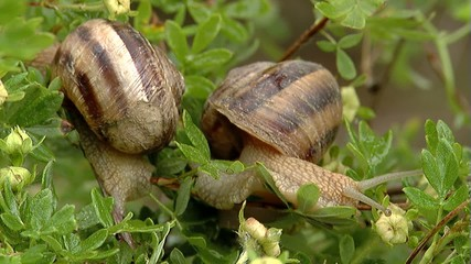 Snails 3 video images
