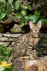 chat assis de profil sur un tronc d'arbre au soleil