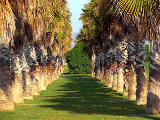 palm avenue in park of barcelona. spain