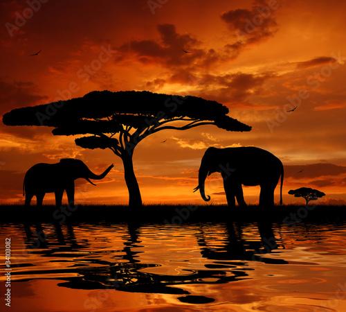 Fototapeten,afrika,tier,schönheit,schwarz