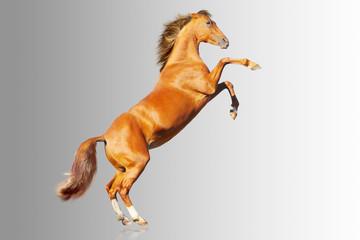 horse on gray