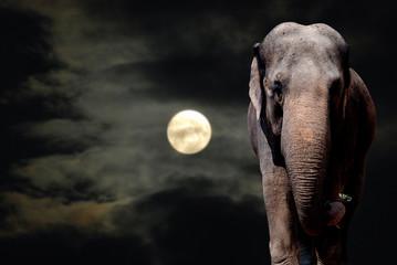 Elephant in Night