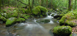 forest stream with mossy rocks