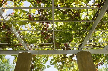 Low angle view of tree branches over a porch