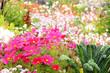 Blumen 217