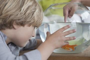 Close-up of a boy looking at fishbowl