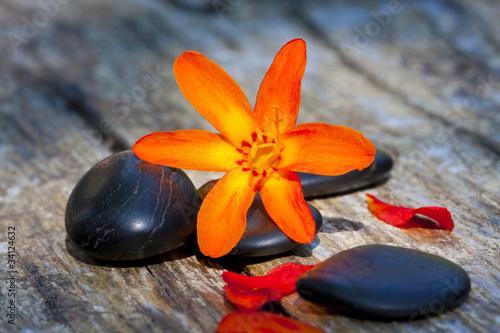 kamienie-i-kwiaty