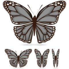 set of gray butterfly isolated on white background